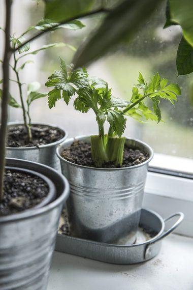Grow a salad indoors
