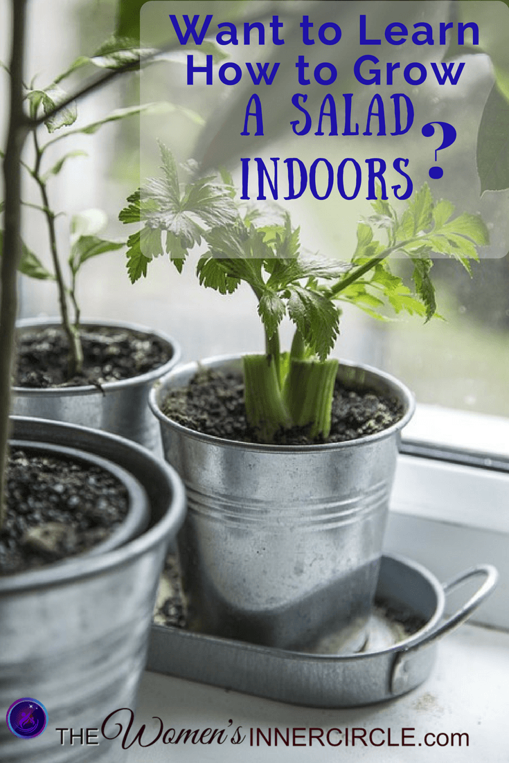 If you'd like to learn how to grow a salad indoors, you will enjoy this article. We have a whole series on Indoor Salad Gardening for You.